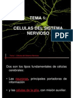 Celulas Sistema Nervioso