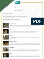 Forest Wildlife - Reading comprehension