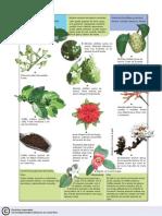 Botanica Rubiaceae