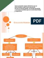 Evol Hombre Teorias