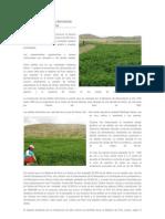 El cultivo de la alfalfa dormante en la sierra alto andina y revision.docx