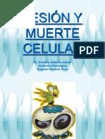 02 LESIÓN Y MUERTE CELULAR ML 2011