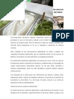 peligrosenmayonesa-120914094338-phpapp01