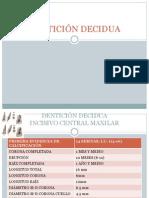 denticindeciduaotemporal-110124084248-phpapp02