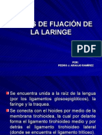 Medios de Fijacion de La Laringe -> Futura Médica