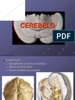 Anatomofisiologia Do Cerebelo