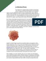 Tratamientos con Nitrofural Óvulo