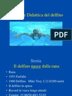 9. Delfino