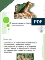 10-mordedurasdeserpiente-120922233823-phpapp02