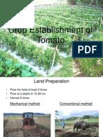 Training of Tomato
