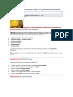 CAPILLARIA SPP.docx