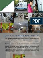 Peluqueria Canina Cristina