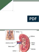 Metodos_diagnosticas Para Enviar