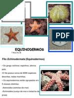 Equinodermos