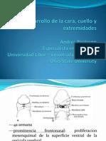 embriologia_cara_cuello_y_extremidades.pdf