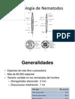 Morfología de Nematodos 2013