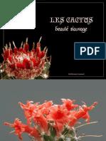 13[1].cactus