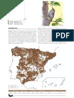 Agateador Comun-Atlas Aves Reproductoras