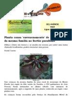 Planta causa 'envenenamento' de seis crianças da mesma família no Sertão paraibano