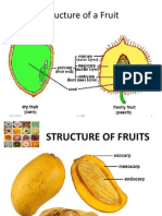 structure of a fruit