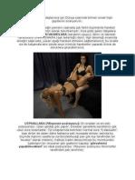 Kamasutra-TÜRKÇE.pdf