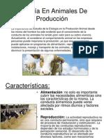 Etología En Animales De Producción
