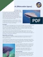 SADC Whale Shark handout