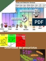 Formas y Diversidad Procaria
