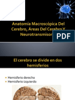 areas del cerebro, neurotransmisores.pptx