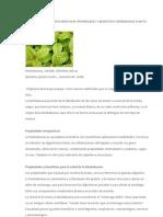 La Hierbabuena Planta Medicinal