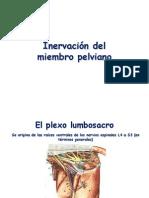 Inervación de Miembro Pelviano