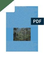 Codigo Etico de Un Ingeniero Ambiental