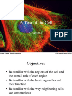 Cell-cell biology