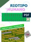 Cariotipo Humano Nueva Version