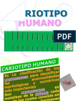 Cariotipo Humano Nueva Version