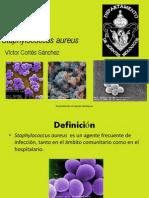 5-staphylococcusaureus-120323232237-phpapp02