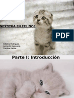 90708431 Presentacion Anestesia en Felinos