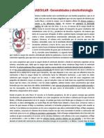 12_1 Cardiovascular I (Generalidades y electrofisiología)