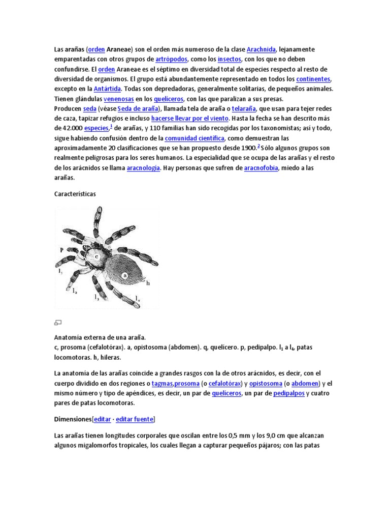 Bonito Anatomía De La Araña Festooning - Anatomía de Las Imágenesdel ...