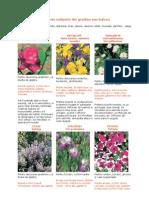 16 Plante Nelipsite Din Gradina Sau Balcon