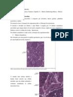 Matéria de Embriologia Comparada -  Biologia até NEURULAÇÃO