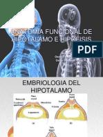 Anatomía Hipotálamo hipófisis