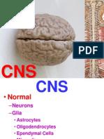 Ch28-CNS-1