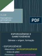 Esporogênese, gametogênese e fecundação