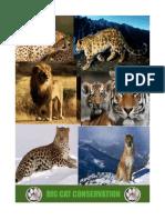 Conservation Big Cats