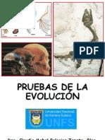 Pruebas Evolucion