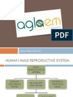 Class12th_HUMAN-REPRODUCTION