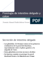 fisiologadeintestinogruesoydelgado-110305212259-phpapp01