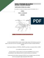 Anatomía y Fisiología de la abeja