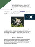 Types of Angelfish Freshwater